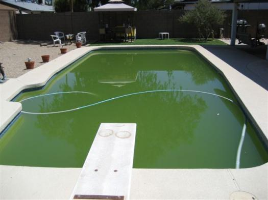 Revive Your Dirty Pool Phoenix Arizona Pool Cleaning Repair And Maintenance Company